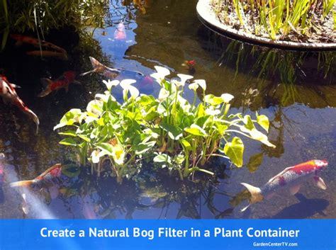 Planter Pond by How To Make A Bog Filter For Small Pond With Garden Pot