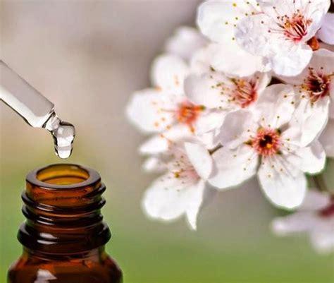 efficacia fiori di bach fiori di bach