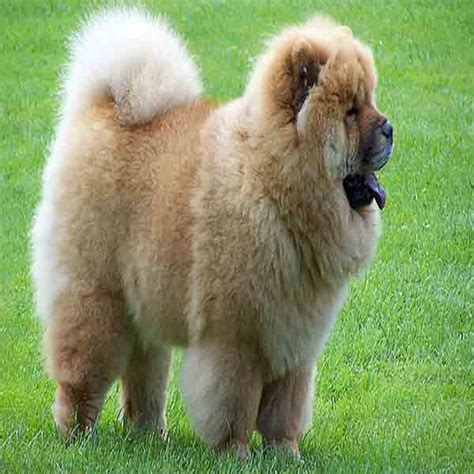popular dogs top breeds quotes