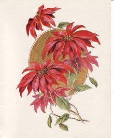 poinsettia tattoo 1000 images about botanical sleeve on