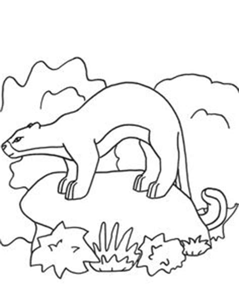jaguarundi coloring page elk google search line drawings for literacy