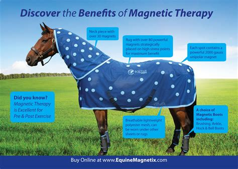 Magnetic Therapy Rugs For Horses by Product Of The Month April 2015 Equine Magnetix Rug