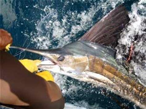 biggame it la pesca sportiva in mare pesci e tecniche di biggame it hot spot di pesca in mare nel mondo pesca d
