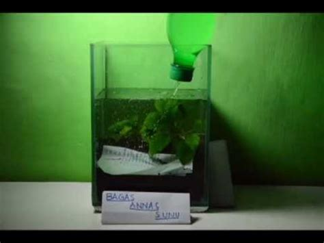 cara membuat aquascaping mini tutorial membuat aquascape youtube