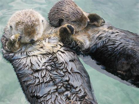 Blind Dog Mike Tom Clark Mild Sea Otter