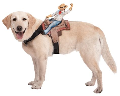 halloween themes with dogs halloween costume ideas for dogs