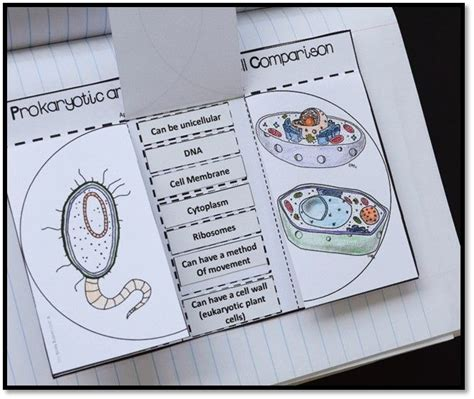 venn diagram comparing prokaryotic and eukaryotic cells cell comparison science interactive notebook science