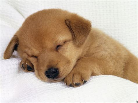 pictures of the cutest puppies pictures of puppies 1 breeds picture