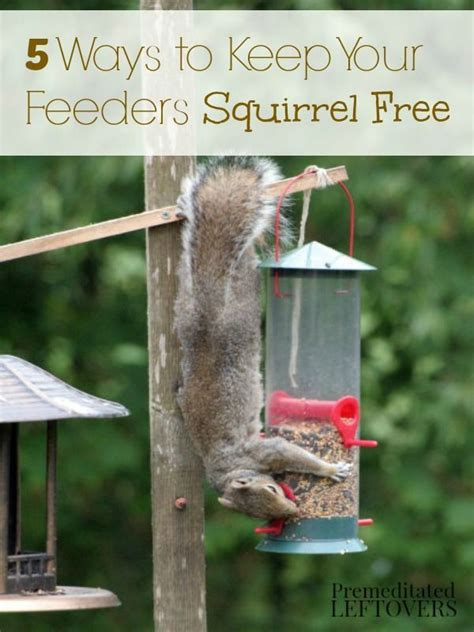 How To Keep Squirrels Away From Garden by 5 Ways To Keep Squirrels Away From Bird Feeders