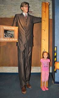 8 feet in inches robert wadlow worlds tallest man exhibit 8 feet 11 inches