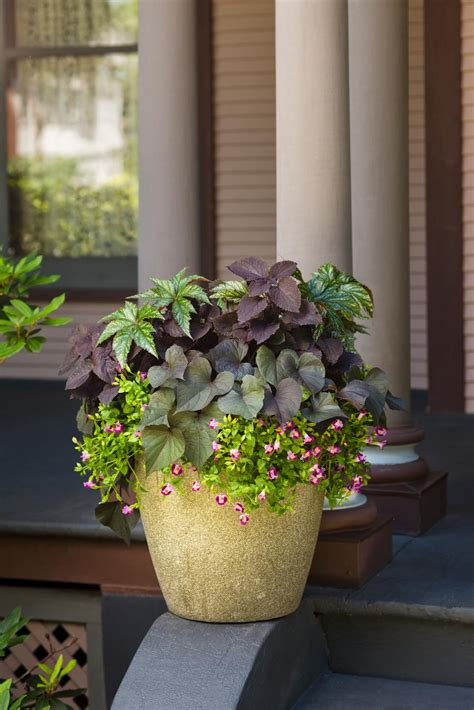 summer container garden ideas summer container garden recipes hgtv