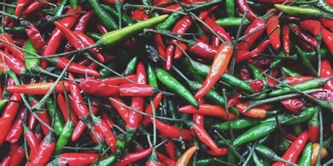 Nyc S 24 Best Food Drink Events This Fall Botanic Garden Chili Pepper Festival