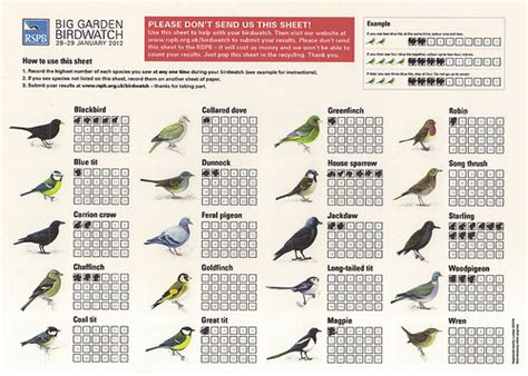 Rspb Great Garden Birdwatch Results Are In by Midmarsh Jottings Rspb Big Garden Birdwatch