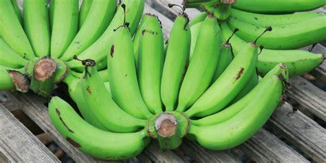 manfaat makan pisang mentah merdekacom