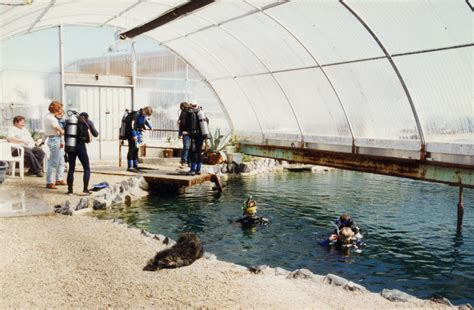 Home Pools by The Center For Land Use Interpretation