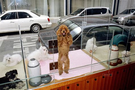 pet shop puppies for sale puppies for sale in pet stores pets world