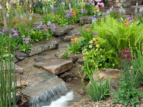 backyard pond plants photos hgtv