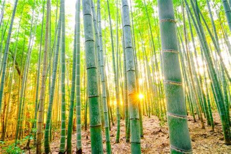 vorhang aus bambus raumteiler vorhang viele modelle mit befestigung