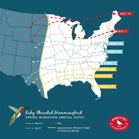 hummingbird migration map journey south hummingbird