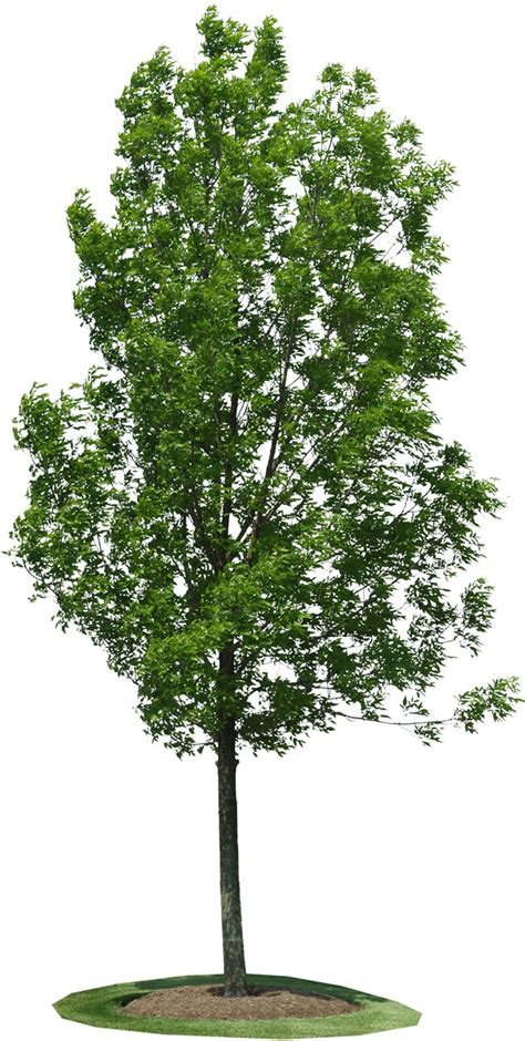 image of tree treea31