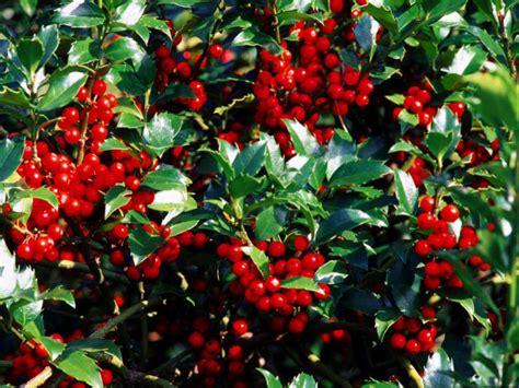 popular landscaping groundcovers  shrubs diy