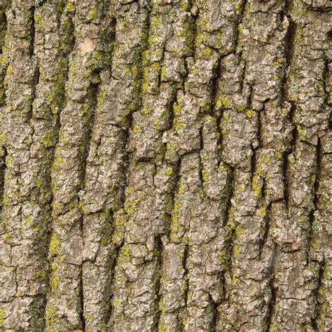 skin the color of bark free photo bark tree nature texture wood free image