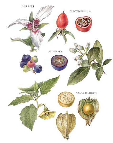 flowers and fruits from the wilderness or thirty six years in and two winters in honduras classic reprint books flower to fruit picture image by tag