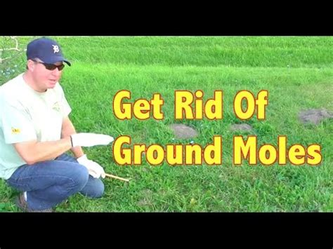 how to get rid of moles in your yard if i can do it y doovi