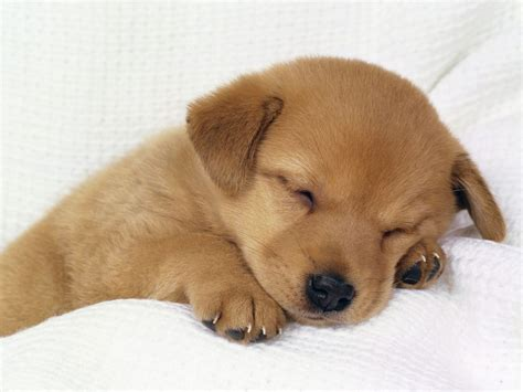 Puppy World: Really Cute Puppy Pictures