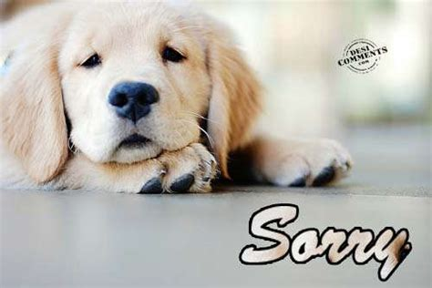 sorry puppy sorry pictures images photos
