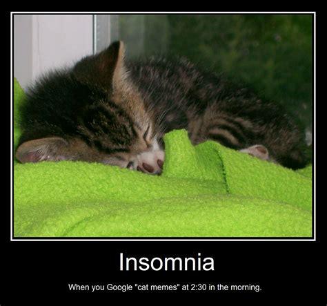 Insomnia Meme - insomnia cat meme www pixshark com images galleries