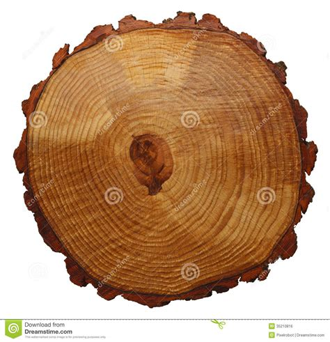 wood cross section tree rings royalty free stock image image 35210816