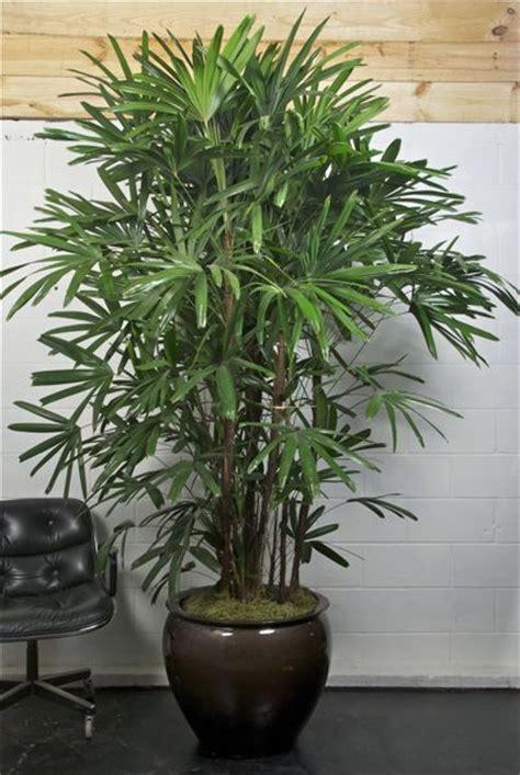 indoor plants online houston s online indoor plant pot store extra large