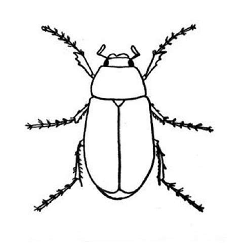 insect coloring book print out coloring pages of bugs 934 kindergarten