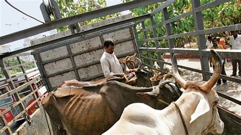 Slaughter House Cases by Bjp Leader Expelled Cow Slaughter Vhp Demands