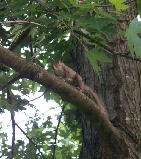 keep squirrels fruit trees a squirrel tip garden org