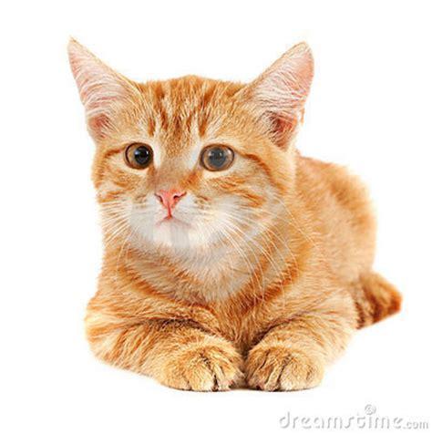 imagenes surrealistas de gatos image gallery imagenes del gato