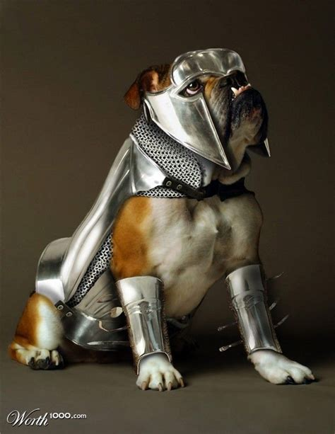 armour dogs armor much dogs
