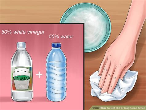 best way to get rid of dog smell in house get rid of dog urine odor in carpet best accessories home 2017