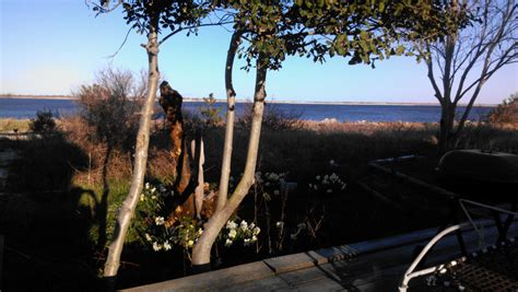 puppy rental nyc pet friendly oceanfront summer rental in point lookout ny point lookout real estate