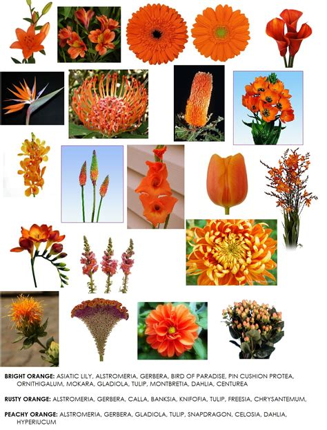 list of fall flowers orange colored flowers readily available in western