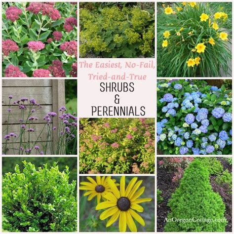 Garden Flowers List Easy Care Shrubs Perennials Gardens Flower And Hydrangeas