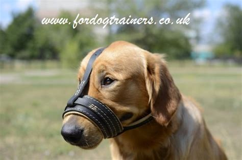 golden retriever muzzle soft muzzle for golden retriever golden retriever muzzle
