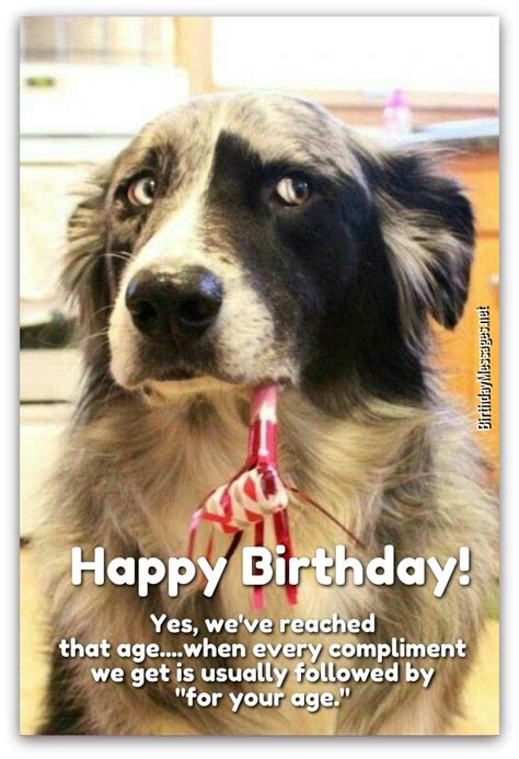 silly happy birthday images birthday wishes birthday messages