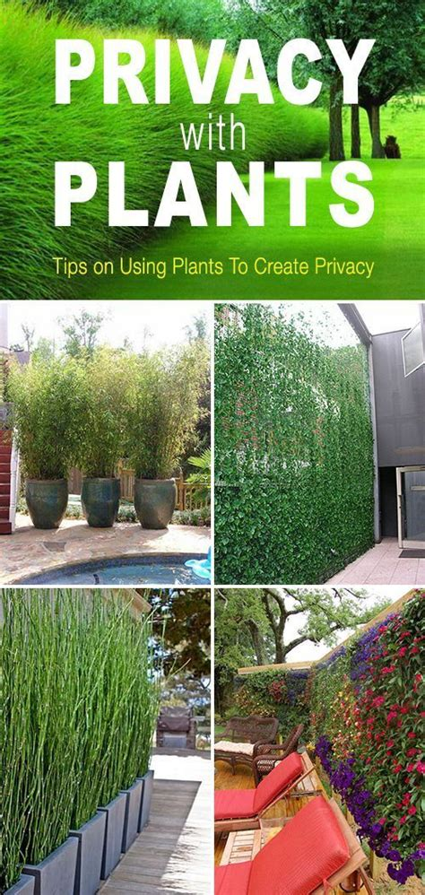How To Create Privacy In Your Backyard by Privacy With Plants Tips And Ideas On How To Use Plants
