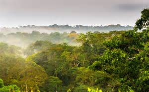What Is A Canopy In The Rainforest by Rainforest Canopy Related Keywords Amp Suggestions