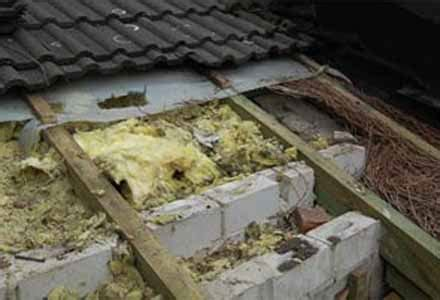 marderabwehr haus haben sie wirklich einen marder auf dem dachboden