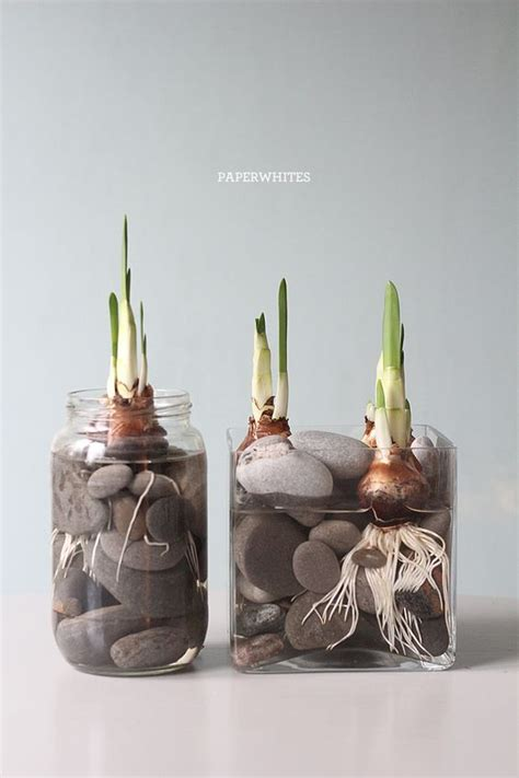 Clear Rocks For Vases by 10 Inspiring Containers For Your Winter Bulbs Plants And Roots