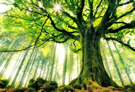 tree pictures 191 mandarle mail a un 225 rbol 161 ahora pod 233 s planeta vivo