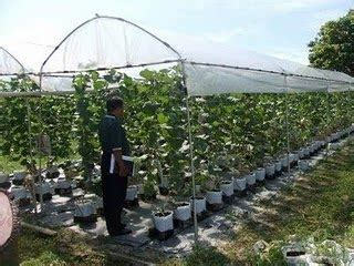 Plastik Rumah Lindungan Hujan restu nuriman agro protection structure for